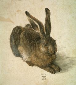 Dürer Kunstdruck Hase